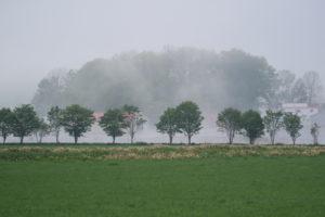 霧にむせぶ畑