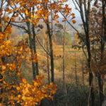 秋色の景色と建物の調和が最高