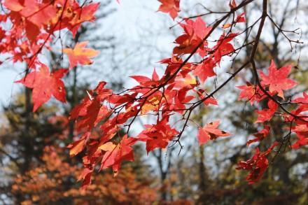 鹿追福原山荘の紅葉