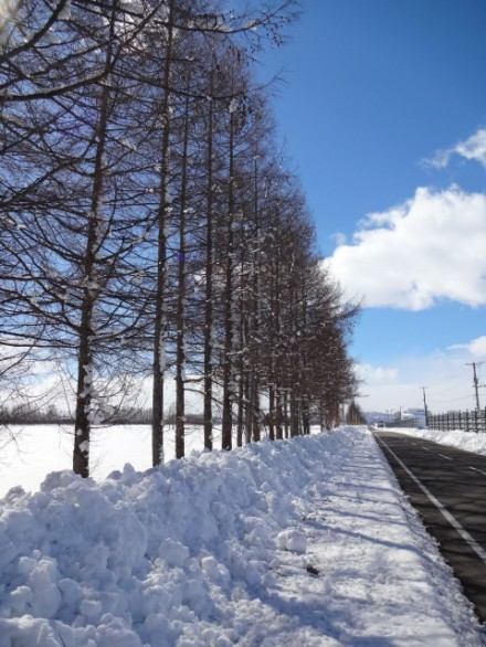 雪景色が最高