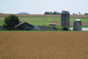 小麦狩りで景色が変わる